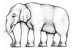 Combien cet éléphant a-t-il de pattes?